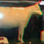 The Famous butter Cow in the Agricultural building